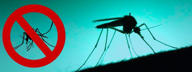 Myggfångare testade